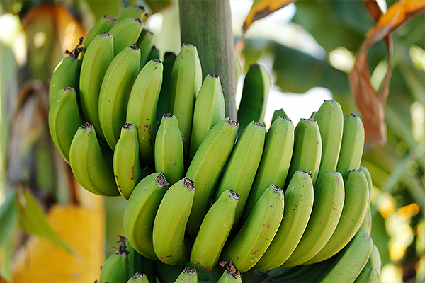 Kako da ubrzate proces sazrevanja banana