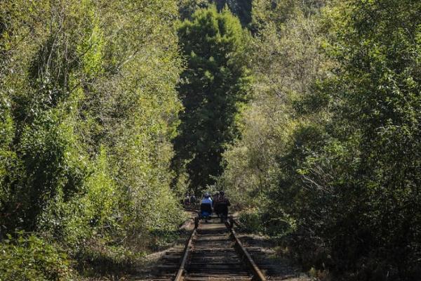 Neobično putovanje kroz Redwood šumu u Kaliforniji
