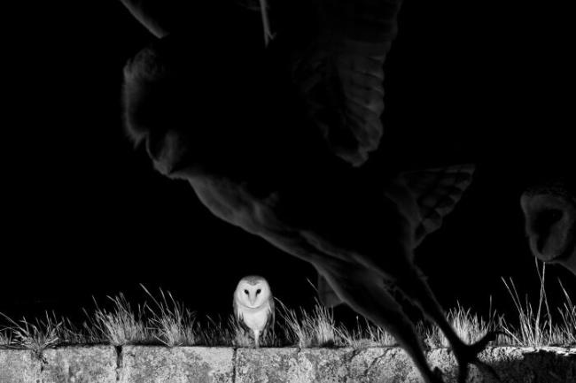 Majka Priroda u rukama veštih fotografa
